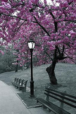 Central Park-Blossom Poster 24 x 36in